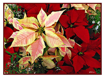 Photograph - Poinsetta Greetings by Joan  Minchak