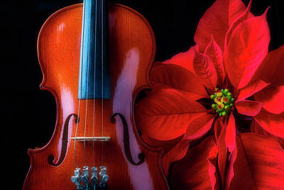 Photograph - Poinsettia And Violin by Garry Gay