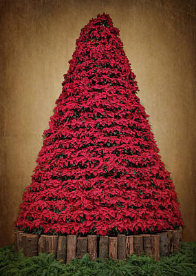 Photograph - Poinsettia Christmas Tree by Susan Rissi Tregoning