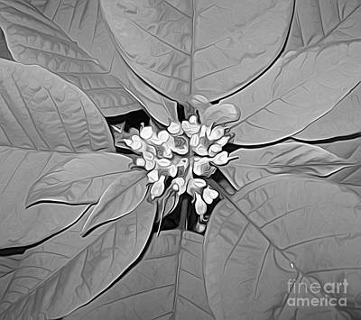 Photograph - Poinsettia Flower Macro In Black And White by Rose Santuci-Sofranko