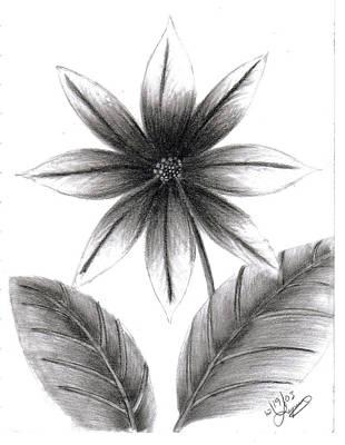 Poinsettia Art Print by Lynnette Jones