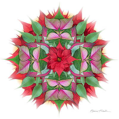 Photograph - Poinsettia Mandala by Bruce Frank