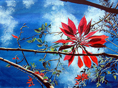 Painting - Poinsettia  Pastora by Sarah Hornsby