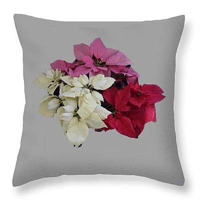 Photograph - Poinsettias Pillow Grey Background  by R  Allen Swezey