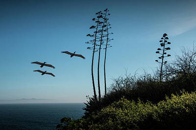 Photograph - Point Fermin And Flying Pelicans With Catalina Island In The Background by Randall Nyhof