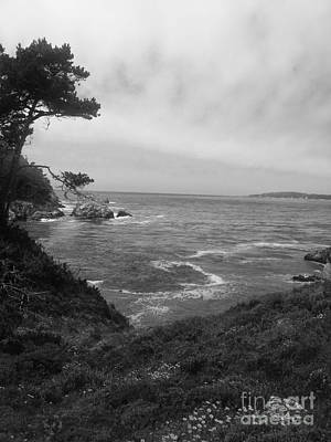 Point Lobos  2 Original