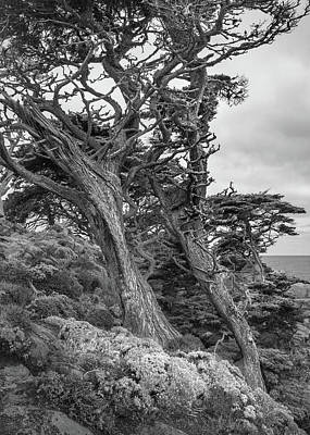 Photograph - Point Lobos - Bent Cypresses by Alexander Kunz
