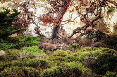 Photograph - Point Lobos - Eden by Shuwen Wu