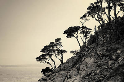 Photograph - Point Lobos IIi Toned by David Gordon