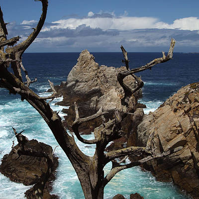 Clouds Rights Managed Images - Point Lobos Rocks and Branches Royalty-Free Image by Charlene Mitchell