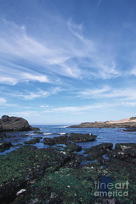 Photograph - Point Lobos Seascape by Stan and Anne Foster