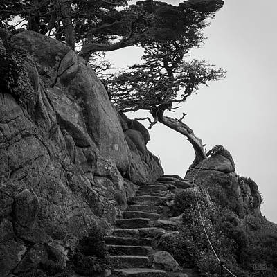 Photograph - Point Lobos X Bw Sq by David Gordon