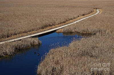 Photograph - Point Pelee Marsh Walk by Rachel Cohen
