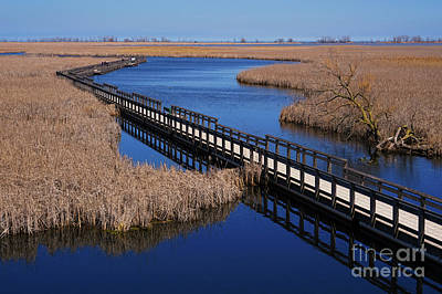 Photograph - Point Pelee Reflections by Rachel Cohen