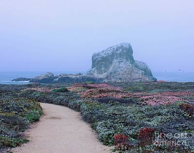 Photograph - Point Piedras Blancas by Marcia Breznay