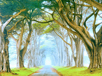 Painting - Point Reyes Cypress In Morning Fog by Dominic Piperata