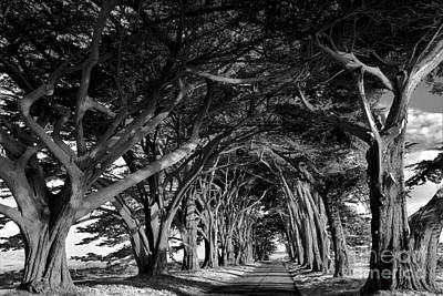 Photograph - Point Reyes Cypress Tunnel - Black And White by Adam Jewell