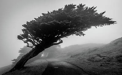 Photograph - Point Reyes Fog Black And White by Donnie Whitaker