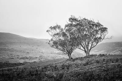 Photograph - Point Reyes - Trees And Pastures by Alexander Kunz
