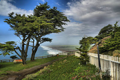 Photograph - Point Reyes Windblown Cypress by Adam Jewell