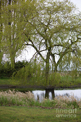 Photograph - Point Roberts Duck Pond by Donna L Munro