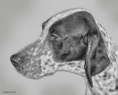 Pure Breed Digital Art - Pointer by Larry Linton