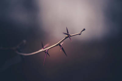 Thorns Wall Art - Photograph - Points Of View by Shane Holsclaw