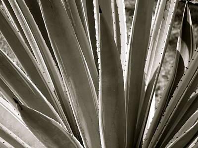 Pointy Plant Art Print by Santiago Rodriguez