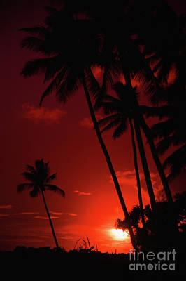 Photograph - Poipu Red Sunset Through Palm Trees- Kauai- Hawaii by Rick Bures