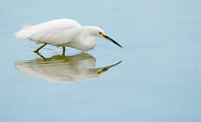 Photograph - $250 - 16x20 Canvas - Snowy Egret Reflection by Tam Ryan