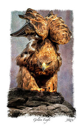 Poised Art Print by John Williams