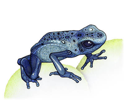 Drawing - Poison Dart Frog by ZH Field