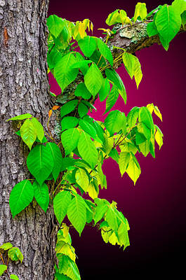 Poison Sumac Photograph - Poison Ivy 2 by Brian Stevens