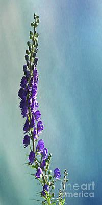Digital Art -  Purple Aconite - Queen Of Poisons by Liz Alderdice