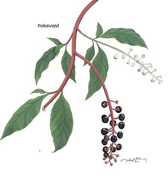 Painting - Pokeweed - Phytolacca Americana by Michael Earney