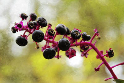 Photograph - Pokeweed by Shawna Rowe