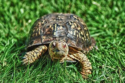 Box Turtle Photograph - Pokey by Linda Pulvermacher