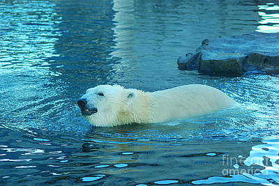 Photograph - Polar Bear 20150117_457 by Tina Hopkins