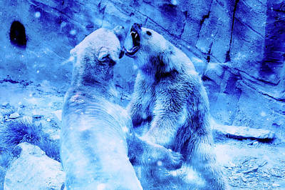 Photograph - Polar Bear Argument by Ractapopulous