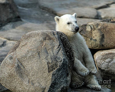 Soap Suds - Polar Bear Cub by Kenneth Lempert