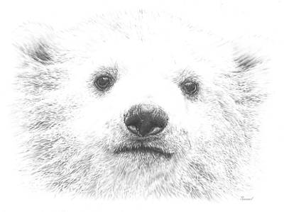 Drawing - Polar Bear Cub by Remrov