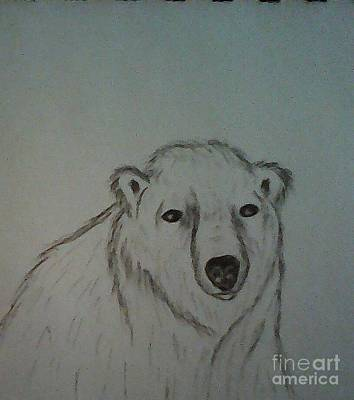 Drawing - Polar Bear by Ginny Youngblood