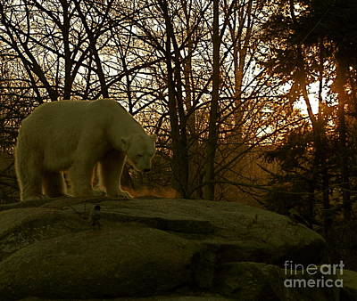 Photograph - Polar Bear II by Louise Fahy