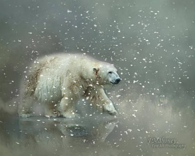 Photograph - Polar Bear In A Snow Storm by Jeanette Mahoney