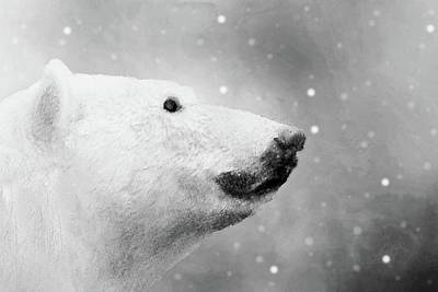 Photograph - Polar Bear In Black And White by Janette Boyd