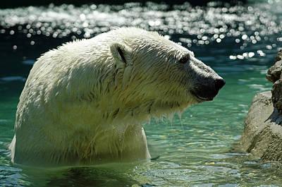 Art Print featuring the photograph Polar Bear by JT Lewis
