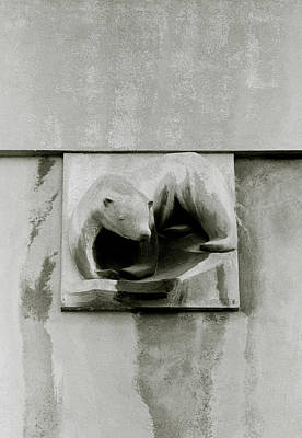 Photograph - Polar Bear Of The Panier by Shaun Higson