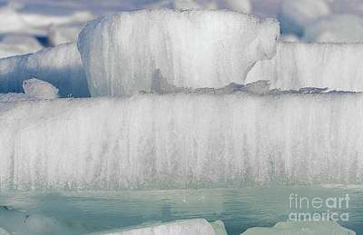 Photograph - Polar Bear On Ice Shelf by Les Palenik