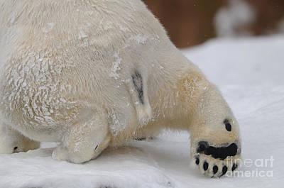 Polar Bear Paw Art Print