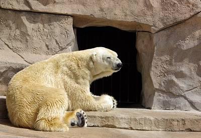 Polar Bear Prayers Art Print by Linda Mishler